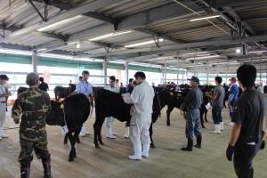 繁殖牛改良能力共進会