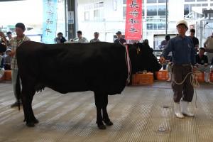 繁殖牛改良能力共進会 (1)