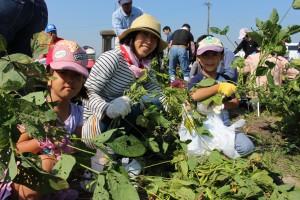 家族で大豆を育てよう (4)