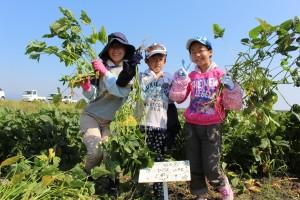 家族で大豆を育てよう (2)