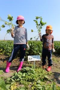 家族で大豆を育てよう (3)