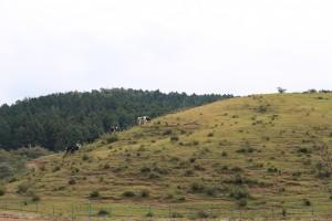 牧場まつり (1)