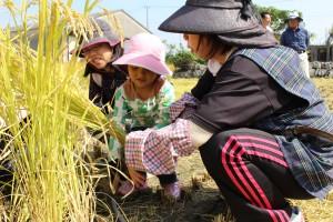 産直米「にこまる」稲刈り交流会
